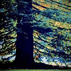 tree HSS IMG_1619 (1) (Rain Sun) Tags: hss slider tree slidersunday