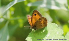 Butterfly......... (law_keven) Tags: butterfly butterflies insects macro macrophotography photography london catford england