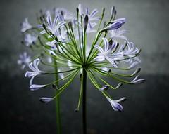 Flower - color (Bill Morgan) Tags: fujifilm fuji xpro2 23mm f2 jpeg alienskin exposurex4