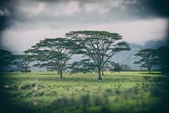 Memory Revisited (Explored) (Katrina Wright) Tags: dsc4206edit2edit kauai landscape memory dream hazy visit revisitthepast trees grass green verdant mountains cloud hss sliderssunday