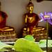 Flower Focus | Bangkok Thailand [Flickr Explore] (Paul Tocatlian | Happy Planet) Tags: flower temple buddhisttemple buddhist bangkok thailand happyplanet asiafavorites