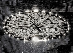 Nature (bobbykwibus) Tags: sun zon natuur nature reflection weerspiegeling water macro blackandwhite zwartwit