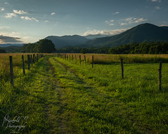 Dawn in Cades Cove (Michael Allen Siebold (Getty Images Contributor)) Tags: sky nature blue tree green light clouds landscape trees shadows fence naturephotography countryside outside eos dawn day