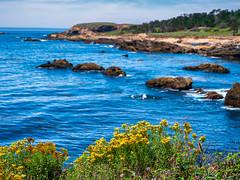 Beautiful Point Lobos (mutovkin) Tags: flowers g9 lumix lumixg9 northerncalifornia ocean panasonic panasonicg9 pointlobosstatenaturalreserve rocks sky carmel california unitedstatesofamerica