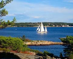 Sailboat and seascape. Oslofjord. Norway