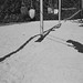 Killarney Park, Vancouver BC Canada. (maigo) Tags: c41 film ilfordxp2 nikkor28mmf28 nikonfm2 summer2019 vancouverbc