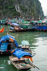 House Boats (Tony Shertila) Tags: nikon5300 architecture asia bay buildings cruise fishing fishingboat halongbay islands roads ship tourist town vietnam worldcruise geo:lat=2094950016 geo:lon=10708527681 geotagged 201903251328160 halong water boats fishingboats boathouses