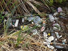 Plastic Shame (mikecogh) Tags: glenelg rubbish patawalonga shame plastic boittles reeds pollution problem