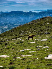 The lonesome horse on top of La Rhune (tjmic_92) Tags: france larhune paysbasque
