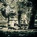 """""""Un cimetière, c'est triste"""" pensa-t-elle. Et pourtant au milieu de cette nature, il lui sembla un instant que la mort pouvait être belle. [Explored 2019 July 15th] (LACPIXEL) Tags: cimeitère cementerio cemetery pèrelachaise paris tombe tumba graveyard grave arbre tree árbol triste sad nature naturaleza belle linda nice mort death muerte photographie passion nikon nikonfr nikonfrance flickr lacpixel"""