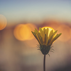 sunrise (ang-yan) Tags: iscogottingen v projar 85mm f28 projection lens focusing helicoid ©angel yanev
