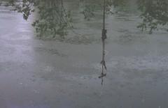 Rainy (querido_amigo) Tags: analog film pentax fuji superia