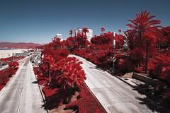 Santa Monica (PLF Photographie) Tags: infrarouge infrared aerochrome digital numérique rouge ir invisible unreal filter tiffen full spectrum canon rp los angeles la usa santa monica road freeway west coast pacific sea