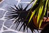 Gandria (::ErWin) Tags: gandria kantontessin schweiz yucca blumentopf schatten shadow