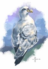 Fulmar (Z0283) #bird #birding #birdphotography #painting #sketchaday #visualdevelopment #birdsketch #arts_gallery #sketching #illustration #birdart #fågel #painter #birds #birdwatching #art_empire #bns_birds #artistoninstagram #ig_birds #birdoftheday #nut (ArtMagenta) Tags: birds birding birdwatching birdpainting