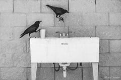 One beer please (Rob Blanken) Tags: birds beer water