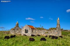 Derelict Croft and black sheep at Paiblesgarry, Isle of North Uist (Nigel Blake, 18.5 MILLION views! Many thanks!) Tags: derelictcroft blacksheep paiblesgarry isleofnorthuist northuist scotland outerhebrides bluesky sunshine