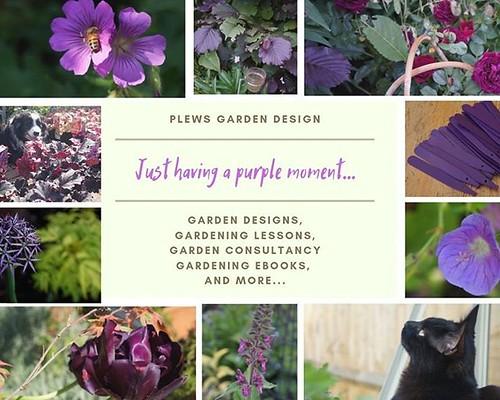I'm just having a purple moment... ⠀ #gardendesigninspiration #purpleflowersofinstagram ⠀ #gardeninglessons #gardenconsultant⠀ #MondayMotivation