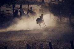 Caballos Jugando (adrianroblan) Tags: sony a6300 sigma 150600 caballos horses freedom libertad luz polvo dust juego ngc