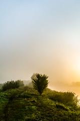 Blue & Yellow (NathanNyx) Tags: sky skies sunrise cloud clouds cloudy morning mist morningmist horizon daybreak sunrisesky sunrises rise instacloud beautiful tree trees grass blue yellow gradient atmosphere kovel turija
