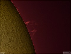 Solar Prominence's - July 13, 2019 (The Dark Side Observatory) Tags: tomwildoner solar sun space outerspace williamsoptics redcat redcat51 telescope asi290mc zwo astronomy astronomer science weatherly pennsylvania observatory darksideobservatory star tdsobservatory earthskyscience daystar quark chromosphere prominence sunspot july 2019