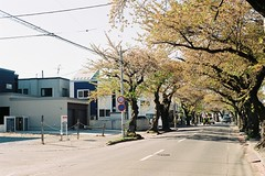 An afternoon (しまむー) Tags: minolta α9000 af 50mm f17 kodak gold 200