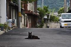 cat (NEKOFighter) Tags: cat neko nikon d500 japan animal 猫