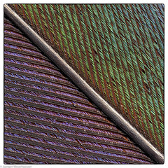 Patterns in nature - Feder / Feather (J.Weyerhäuser) Tags: feather feder hmm heliconfocus macro macromondays patternsinnature raynox250 stacking