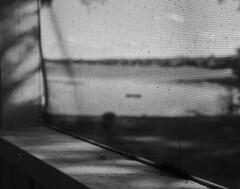 Afternoon on the Lake (PositiveAboutNegatives) Tags: leica slr leicaflexsl 35mm leicar 35mmelmarit film analog bw blackandwhitefilm foma fomapan fompan100 coolscan vuescn rodinal 150 florida lake pond afternoonlight screenedporch