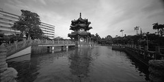 Taipei 新公園 (jasoncremephotography) Tags: taipei taiwan blackandwhite monochrome film acros100 acros fujifilm horseman horsemancamera swp612