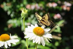 Cincinnati Zoo 7-13-19-9019 (joemastrullo) Tags: cincinnati zoo botanical garden
