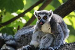 Cincinnati Zoo 7-13-19-8902 (joemastrullo) Tags: cincinnati zoo botanical garden