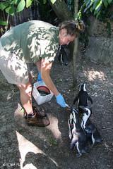 Cincinnati Zoo 7-13-19-8618 (joemastrullo) Tags: cincinnati zoo botanical garden