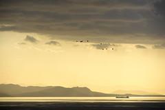 travelling (ταξιδεύοντας) (athanecon) Tags: gulls seagulls flying flight clouds sky light colours colors sea ship saronic gulf saronicgulf aegina island greece lines alimos alimosview pani lofos