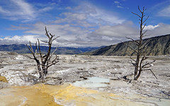 Mammoth Hot Springs - Yellowstone National Park, WY (SomePhotosTakenByMe) Tags: mammothhotsprings mammoth wyoming yellowstone nationalpark yellowstonenationalpark outdoor trail hike wanderung usa america amerika landschaft landscape unitedstates natur nature baum tree