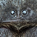 Velvet Spider 2 (Can Tunçer) Tags: can cantunçer cantuncer canon canon6d closer close nature macro macros macrophotography makro micro mikro makros microscope microscop nikon nikon10x turkey turkiye tunçer türkiye tuncer tabletop stack nikonsmallworld insects stacking studio spider