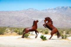 Fighting Stallions (Robert F. Carter) Tags: anzaborregodesertstatepark dry statepark stateparks waste borregosprings california unitedstatesofamerica horses horse wildhorses galletameadows galletameadowsestates metalsculpture metalsculptures ricardobreceda borregovalley