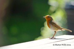 Photo of Robin @ The Booking Hall