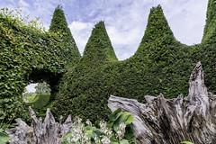 The Stumpery (gardenpower) Tags: england gardens arundelcastle stumpery