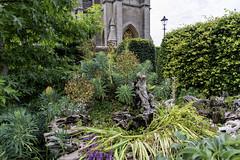 The Stumpery (gardenpower) Tags: england gardens stumpery arundelcastle