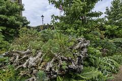 The Stumpery (gardenpower) Tags: england gardens stumpery