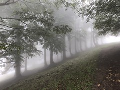 trees guide through the mist (Rosmarie Voegtli) Tags: hohewinde passwang trees bäume arbres alberi sooc mist nebel brouillard forest wald fôret mystic mystisch mystique mood atmosphere leadingline stems light odc ourdailychallenge photographic lines magical magisch magique