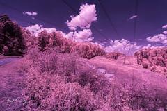 Roadside Attraction (4 Pete Seek) Tags: infrared silvercomettrail silvercomet trail bikeride biketrail trek trek21 infraredconvertedcamera supercolorinfrared supercolor590nm supercolor 590nm lifepixels convertedcamera rokinon12mmf2