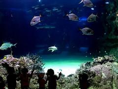 Aquarium, Sydney (Dama Suerte) Tags: sydney australia oz sydneyharbourbridge coogee dolphin manly manlybeach coogeebeach aquarium travel photography