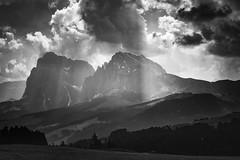 Seiseralm - Alpe di Siusi (markozorzin) Tags: italy italie dolomiten dolomites nikonz6 nikon seiseralm alpedisiusi alpedesiusi rosengarten kastelroth castelrotto alpen alps unescoworldheritage unesco southtyrol tyrol tirol sassolungo langkofel