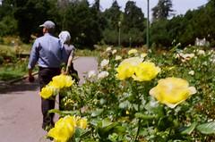 000670860023 (nautical2k) Tags: olympusom2n lomography400 film 35mm california oakland marcom rose garden