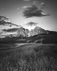 Alpe de Seusi - Langkofel (markozorzin) Tags: italy italie dolomiten dolomites nikonz6 nikon seiseralm alpedisiusi alpedesiusi rosengarten kastelroth castelrotto alpen alps unescoworldheritage unesco southtyrol tyrol tirol langkofel saaolungo
