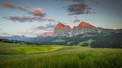 Seiseralm - Alpe di Siusi (markozorzin) Tags: italy italie dolomiten dolomites nikonz6 nikon seiseralm alpedisiusi alpedesiusi rosengarten kastelroth castelrotto alpen alps unescoworldheritage unesco southtyrol tyrol tirol langkofel sassolungo