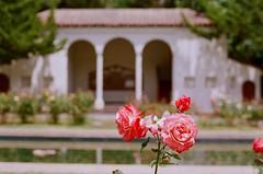 000670860026 (nautical2k) Tags: olympusom2n lomography400 film 35mm california oakland marcom rose garden