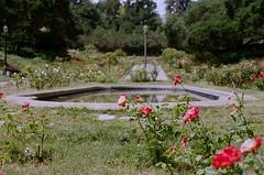 000670860025 (nautical2k) Tags: olympusom2n lomography400 film 35mm california oakland marcom rose garden